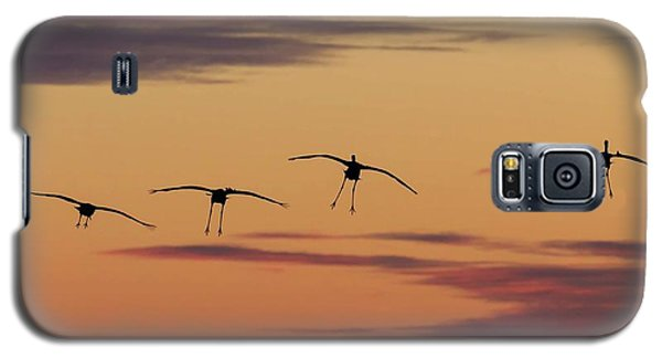 Horicon Marsh Cranes #4 Galaxy S5 Case