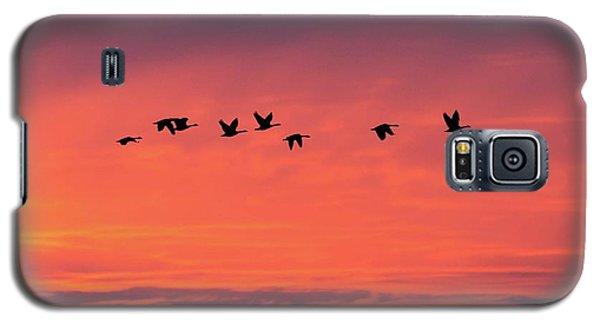 Horicon Marsh Geese Galaxy S5 Case