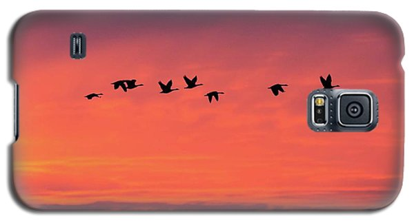 Horicon Marsh Geese Galaxy S5 Case
