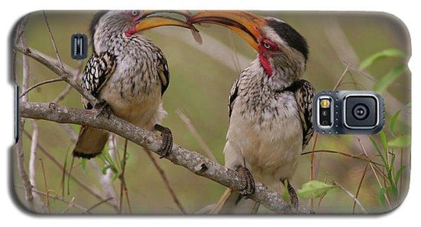 Hornbill Love Galaxy S5 Case