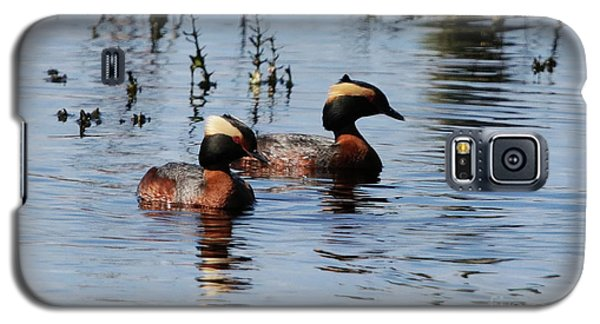 Horned Grebe Couple Galaxy S5 Case