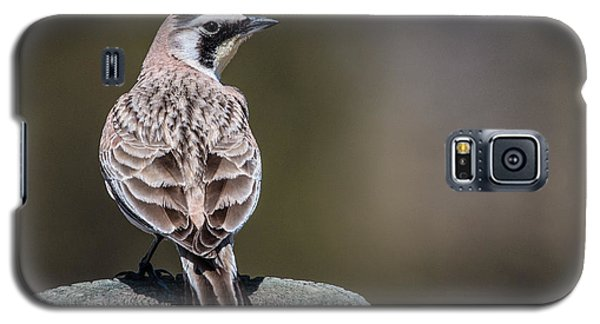 Horned Lark Galaxy S5 Case
