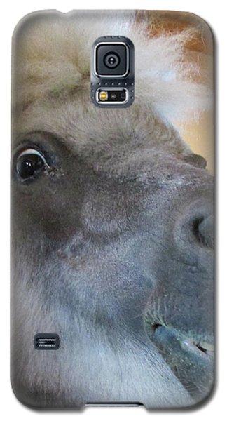 Horse 11 Galaxy S5 Case