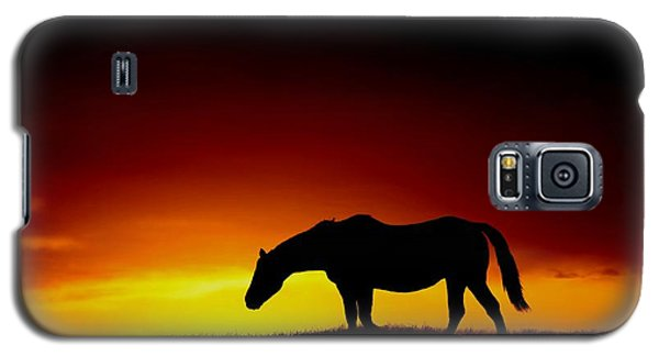 Horse At Sunset Galaxy S5 Case