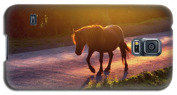 Horse Crossing The Road At Sunset Galaxy S5 Case