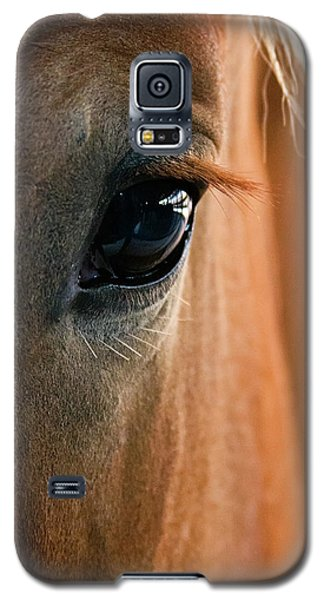Horse Eye Galaxy S5 Case