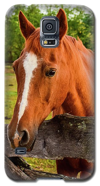 Horse Friends Galaxy S5 Case