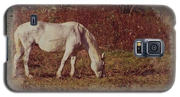 Horse Grazing Galaxy S5 Case