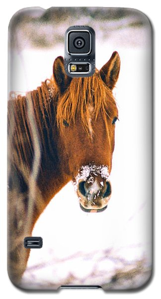 Horse In Winter Galaxy S5 Case