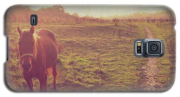 Horse Galaxy S5 Case by Lyn Randle