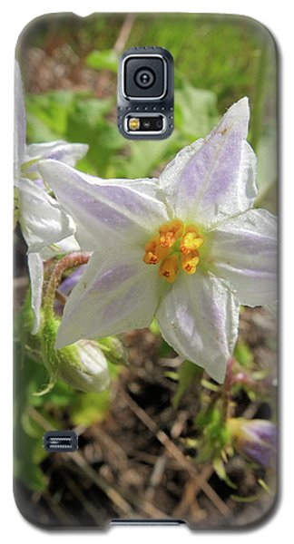Galaxy S5 Case featuring the photograph Horse Nettle by Scott Kingery