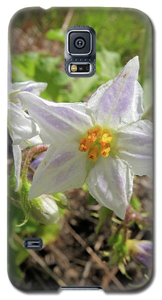 Horse Nettle Galaxy S5 Case by Scott Kingery