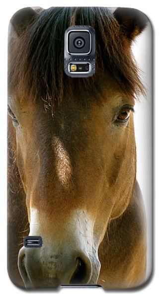 Horse Of Course Galaxy S5 Case