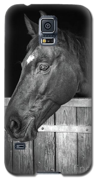 Galaxy S5 Case featuring the photograph Horse Portrait by Delphimages Photo Creations