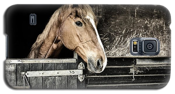 Galaxy S5 Case featuring the photograph Horse Profile In The Stable by Marion McCristall
