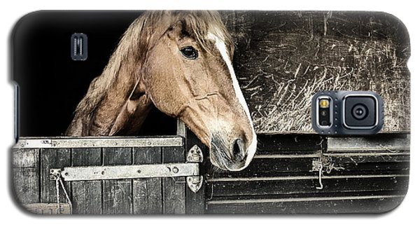 Horse Profile In The Stable Galaxy S5 Case by Marion McCristall