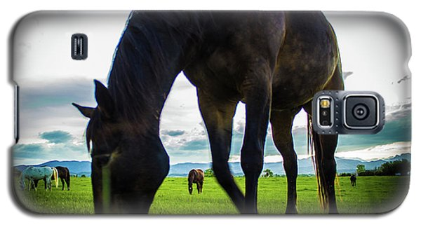 Horse Time Galaxy S5 Case