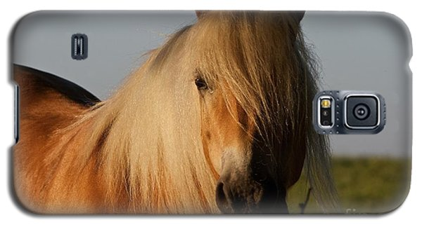 Horse With No Name Galaxy S5 Case by Gary Bridger