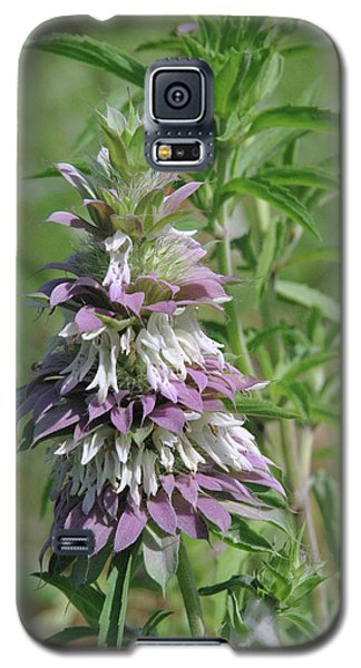 Horsemint Galaxy S5 Case by Robyn Stacey