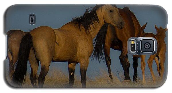 Horses 1 Galaxy S5 Case