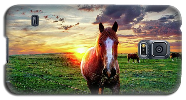 Horses At Sunset Galaxy S5 Case