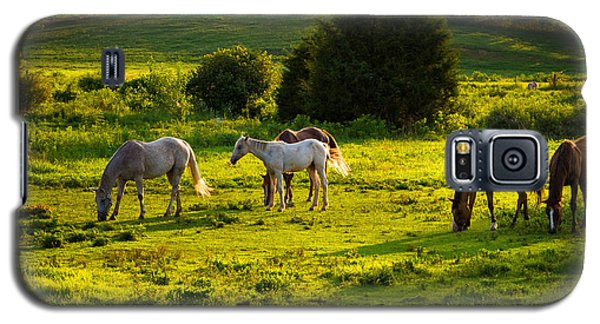 Horses Grazing In Evening Light Galaxy S5 Case