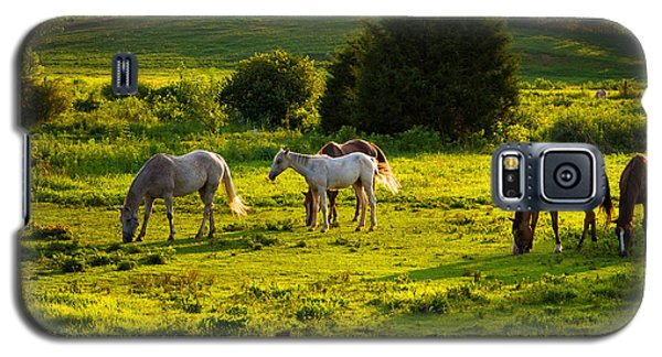 Horses Grazing In Evening Light Galaxy S5 Case