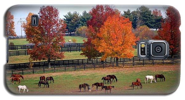 Galaxy S5 Case featuring the photograph Horses Grazing In The Fall by Sumoflam Photography