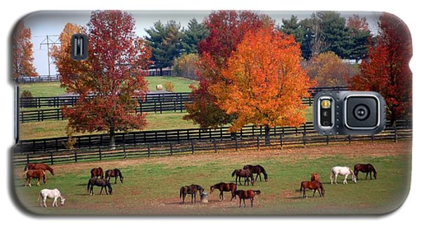 Horses Grazing In The Fall Galaxy S5 Case