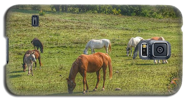 1003 - Horses In A Pasture I Galaxy S5 Case