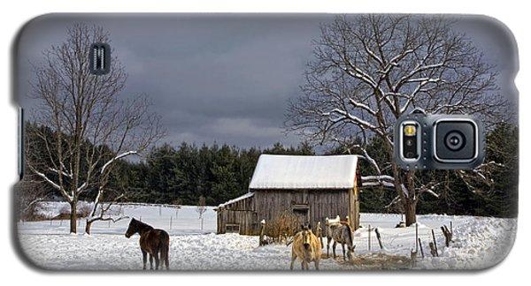 Horses In Snow Galaxy S5 Case