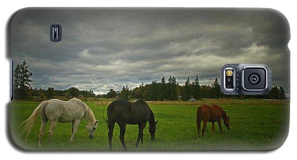 Horses Under Heavy Sky Galaxy S5 Case