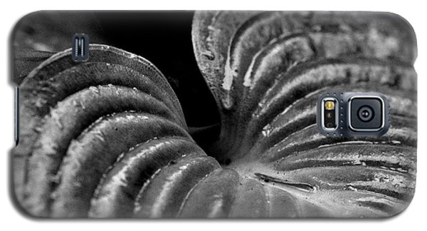 Hosta Leaf In Black And White Galaxy S5 Case