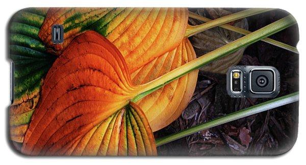 Hostas In Autumn Galaxy S5 Case