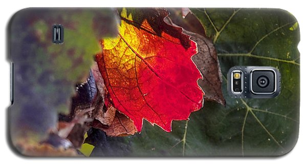 Hot Autumn Colors In The Vineyard Galaxy S5 Case
