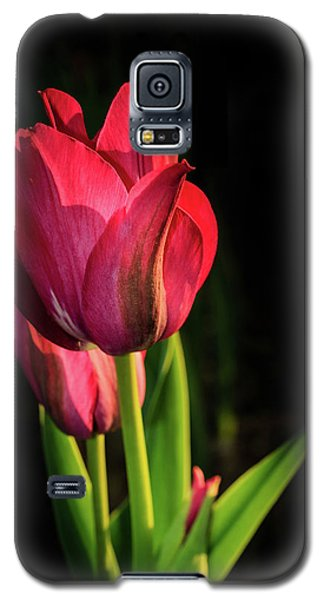 Hot Pink Tulip On Black Galaxy S5 Case