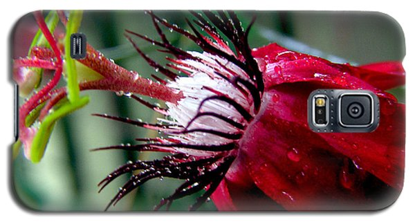 Hot Red Passion Galaxy S5 Case