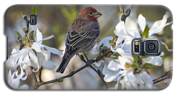 Galaxy S5 Case featuring the photograph House Finch - D009905 by Daniel Dempster
