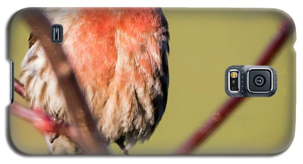 Galaxy S5 Case featuring the photograph House Finch In Full Color by Ricky L Jones