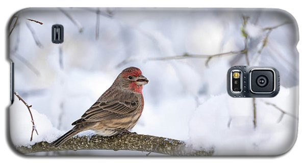 Galaxy S5 Case featuring the photograph House Finch In Snow by Brian Bonham