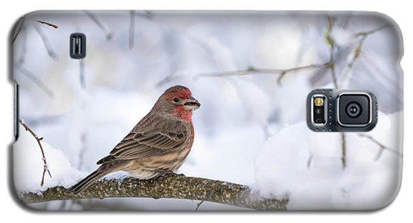 House Finch In Snow Galaxy S5 Case by Brian Bonham