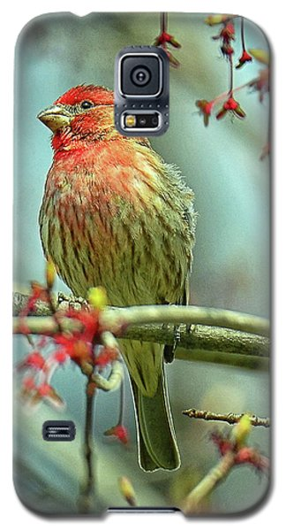 House Finch In Spring Galaxy S5 Case