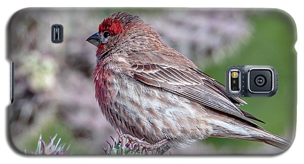 House Finch Male Galaxy S5 Case