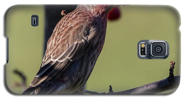 House Finch Vs Crabapple  Galaxy S5 Case