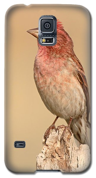 House Finch With Crest Askew Galaxy S5 Case by Max Allen
