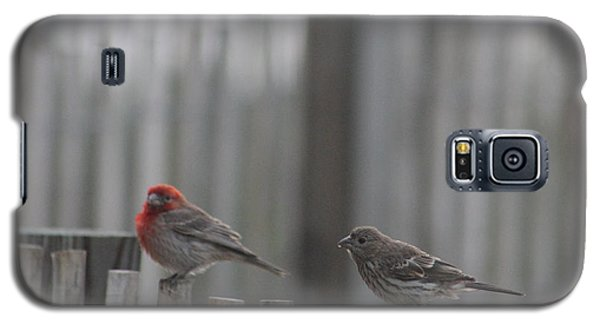 House Finches On The Fence Galaxy S5 Case