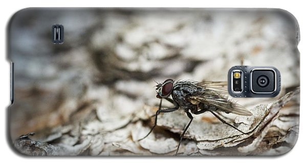 Galaxy S5 Case featuring the photograph House Fly by Chevy Fleet