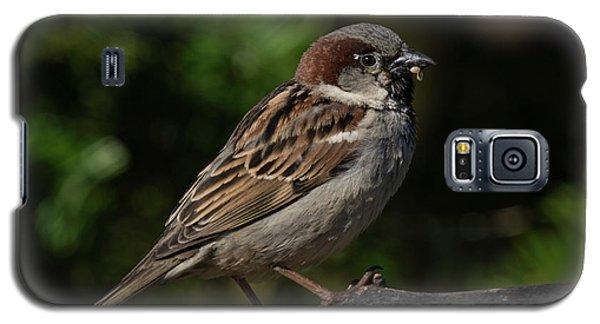 House Sparrow 2 Galaxy S5 Case
