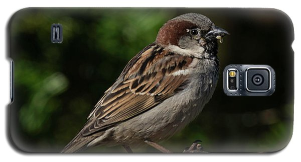 House Sparrow 2 Galaxy S5 Case