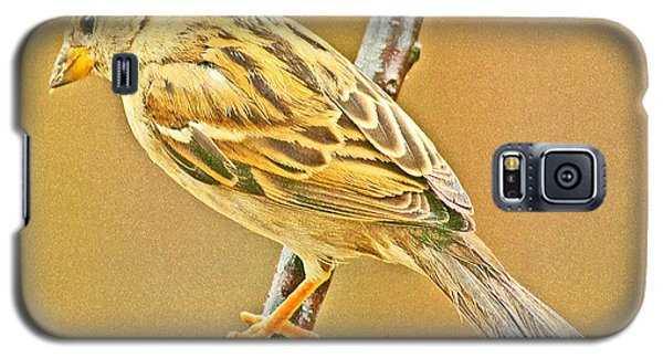 Galaxy S5 Case featuring the photograph House Sparrow by A Gurmankin